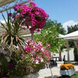 Градина